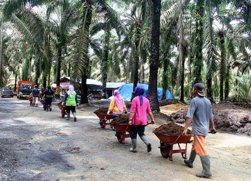 Beberapa perempuan silih berganti membawa tumpukan kotoran sapi mengunakan angkong (puan.co).