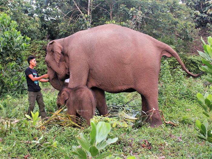 Asa Ruang Hidup Gajah di Tesso Nilo